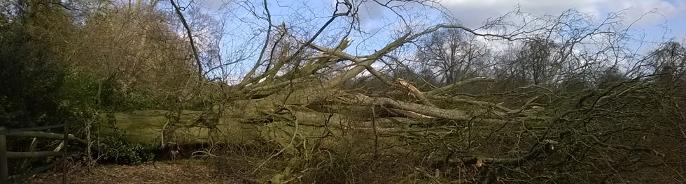 Tree Clearance From Marks Log Splitting Service
