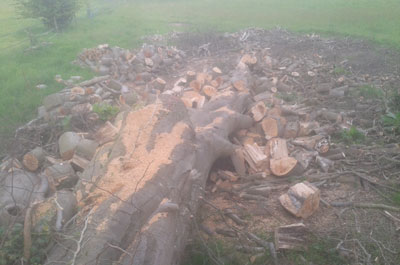 Tree Clearances By Mark's Log Splitting Service